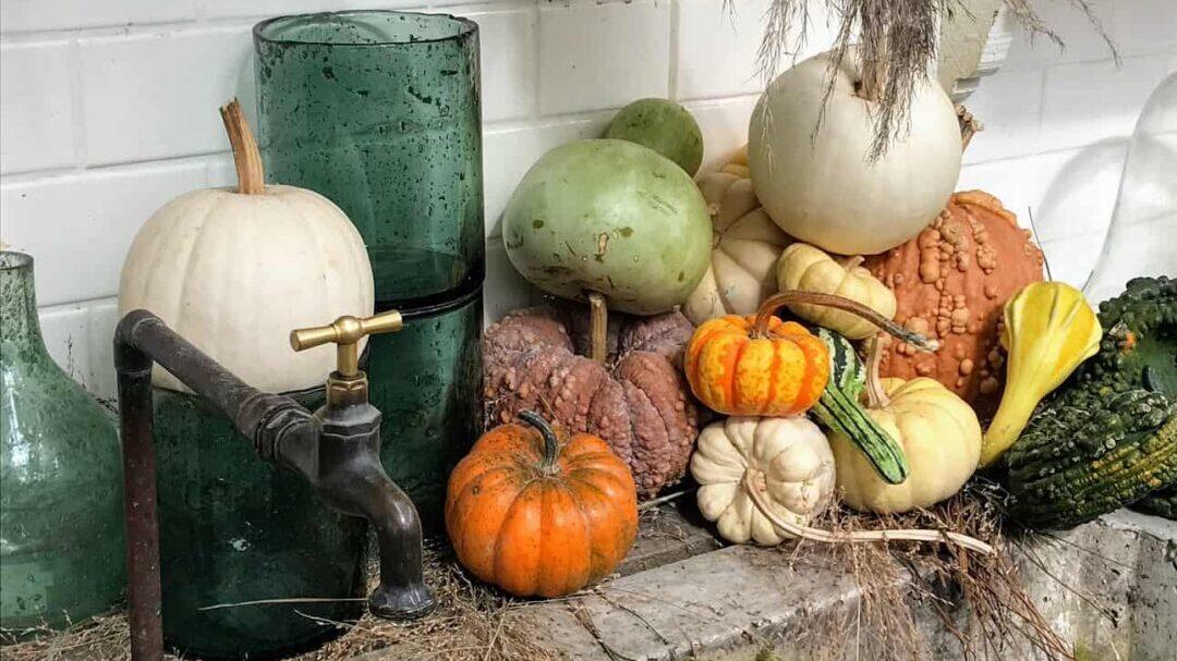 Seasonal Plumbing Tips: Spend Less, Learn More